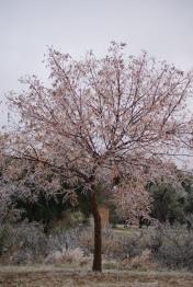 Tree outside home