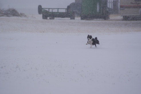 He loves running in the snow.